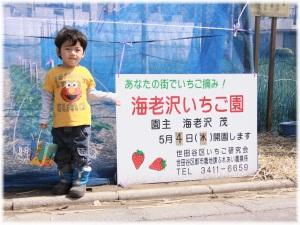 2011ichigo1
