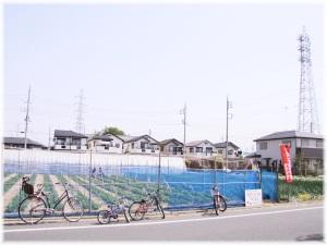 2011ichigo2